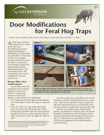 Door modification on feral hog traps - Plum Creek Watershed ...