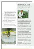 AVOCADOS - Biosecurity New Zealand - Page 7