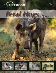 in Texas - Coping with Feral Hogs