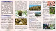 Επιβλαβή έντομα της Κύπρου