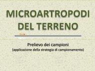 microartropodi del terreno 2 - Scuola21 - Fermi