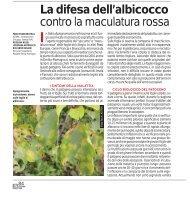 La difesa dell'albicocco contro la maculatura rossa - Tec.bio