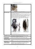 Gracilaria vermiculophylla - Främmande arter i svenska hav - Page 2