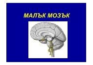 Малък мозък