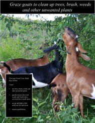 Graze goats to clean up trees, brush, weeds - Leopold Center for ...