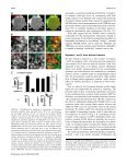The SNARE Motif Is Essential for the Formation of Syntaxin Clusters ... - Page 6