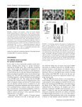 The SNARE Motif Is Essential for the Formation of Syntaxin Clusters ... - Page 7