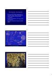 Ascomycota; Ascomycetes - CBS