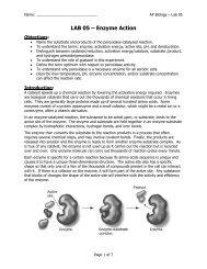 AP Lab 05 - Enzyme Activity