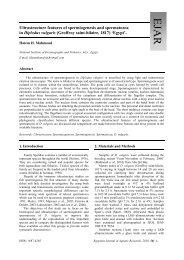 Diplodus vulgaris