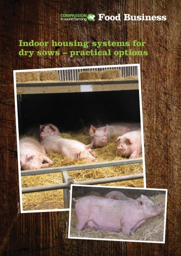 Indoor housing systems for dry sows - Compassion in World Farming