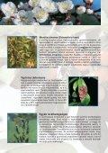 Egyéniség - WEB-SET - Page 2