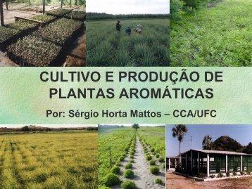 Por: Sérgio Horta Mattos - IV Simpósio Brasileiro de Óleos Essenciais