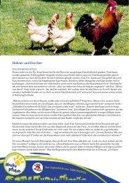 Hühner und ihre Eier - Starke Pfoten