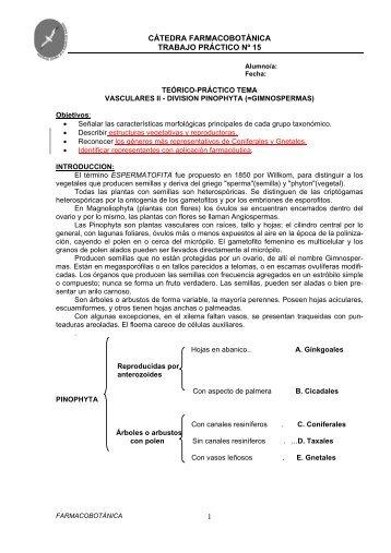 Pinophyta.pdf