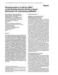 Report Phosphorylation of p38 by GRK2 at the ... - Severo Ochoa