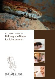 Schulzimmer Zoo-Homepage.indd - Naturama