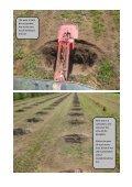 cherry plantation - Gp1.ro - Page 5