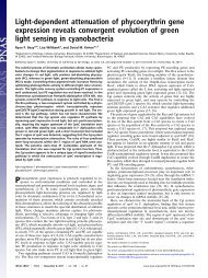 Light-dependent attenuation of phycoerythrin gene expression ...