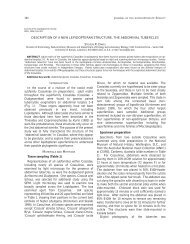 DESCRIPTION OF A NEW LEPIDOPTERAN ... - Yale University