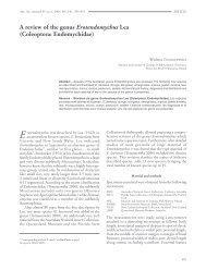 A review of the genus Erotendomychus Lea (Coleoptera ...