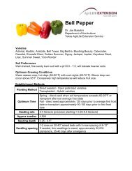 Bell Pepper | Commercial and Specialty Crop ... - Aggie Horticulture