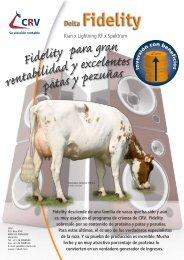 FIDELITY, el toro Holstein Rojo más rentable