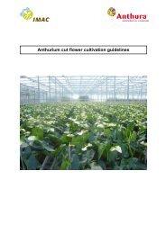 Manual Anthurium cut flower ENG - Anthura