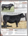 Touch Of Class Red & Black Angus Female Sale - December 10, 2010 - Page 5