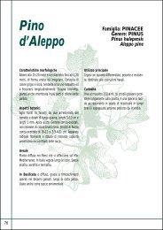 Pino d'Aleppo
