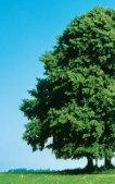 Aus Bioabfall wird beste Komposterde, Strom und Wärme - ZAK - Seite 2