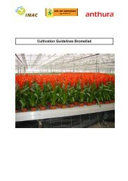 Cultivation Guidelines Bromeliad