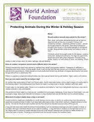 Protecting Animals During the Winter & Holiday Season