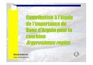 Argyrosomus regius - Fondation Internationale du Banc d'Arguin