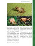 Kihansi Spray Toad Re-introduction Guidelines - Amphibian ... - Page 5