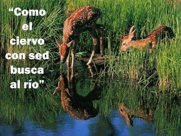 Como el ciervo.pdf - Editorial La Paz