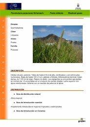 Pennisetum purpureum Schumach. Pasto ... - Interreg Bionatura