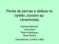 Perda de pernas e defesa no opilião Jussara sp. (Arachnida)