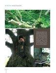La enfermedad del chancro en eucaliptos del País Vasco - Page 3