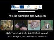 Klinická morfologie – savci
