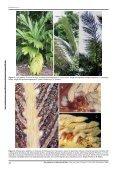 The genus Hexopetion Burret (Arecaceae) - Portal del Sistema de ... - Page 2