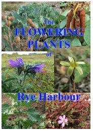 flower_report old.pdf - Wild Rye