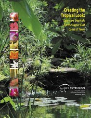 Creating the Tropical Look: Low-care Tropicals for - Aggie Horticulture