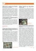 PROGRAMA OIMT – CITES PARA LA IMPLEMENTACIÓN ... - ITTO - Page 5