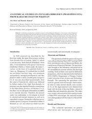 anatomical studies on iyengaria børgesen - Pakistan Academy of ...