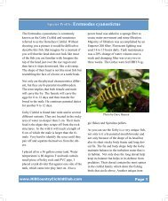 Species Profile: Eretmodus cyanostictus - Hill Country Cichlid Club