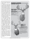 WHITETAIL DEER - Boone and Crockett Club - Page 2