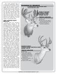 WHITETAIL DEER - Boone and Crockett Club - Page 3