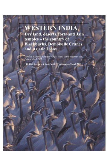 Brutto artsliste – Gujarat – Rajasthan - Netfugl.dk