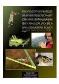 Grilli per la testa.pdf - Natura Mediterraneo - Page 2